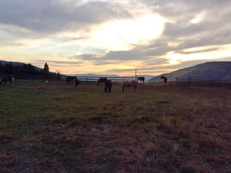 Horses_sun-1