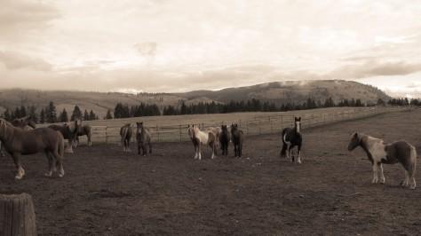 Horse Work (blog)-1