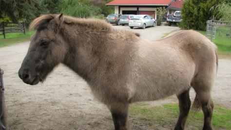 Horse Work (blog)-3