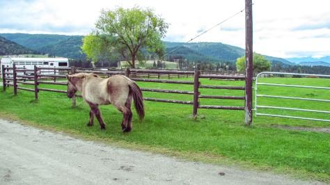 Horse Work (blog)-4