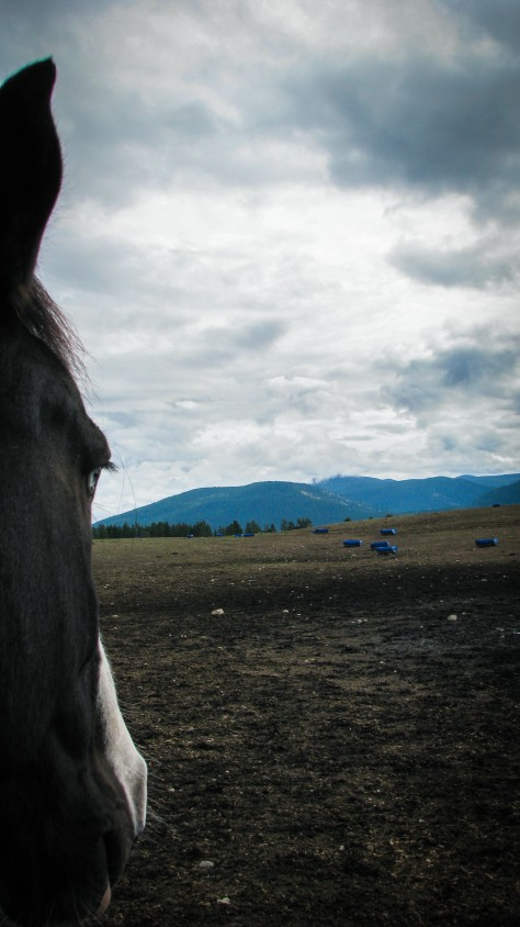 Horse Work (blog)-8